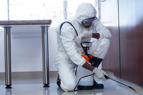 Commercial Pest Control Services in Mumbai, Thane, Navi Mumbai