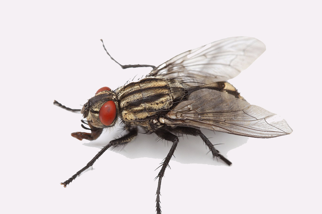 Fly Control Services in Mumbai, India